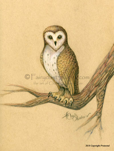thinking of percy european barn owl art print drawing by charity
