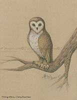 Thinking of Percy - Owl Art Print